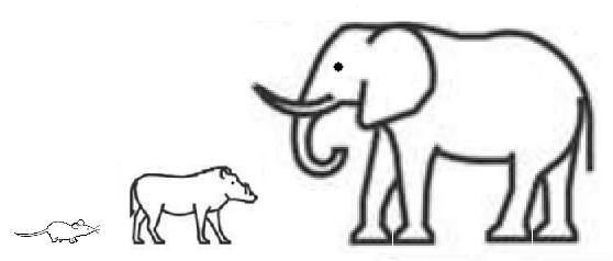 Ratón Jabali Elefante
